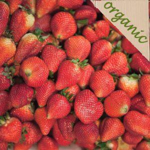 Zeds Organic Strawberry Cardboard punnet – 250g