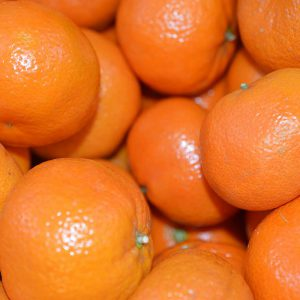 Zeds (Spain) Satsuma/Clem/Tang/Nardicotts – 4 Pieces