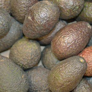 Zeds (Spain) Avocado