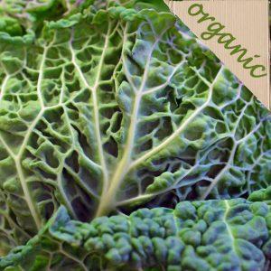 Zeds Organic Savoy Cabbage – 1 Piece
