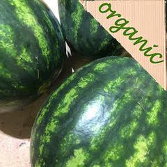 Organic Watermelon Spain