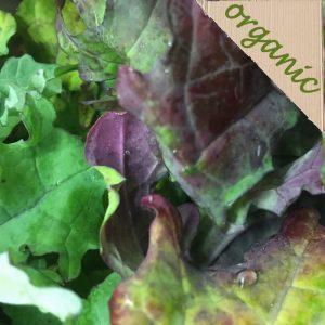 Zeds Organic Red Russian Kale – Bag