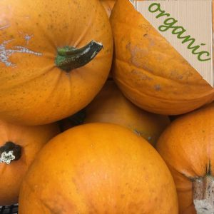 Organic Edible Carving Pumpkin