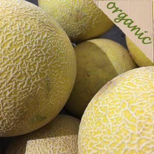Zeds Organic Galia Melon